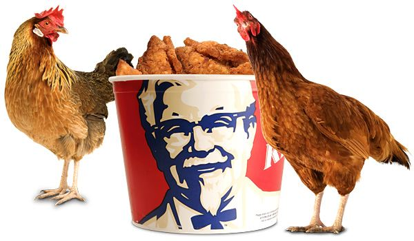 Funny Kentucky Fried Chicken: Have You Ever Seen KFC Chicken? Chicken No Feathers No
