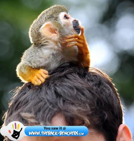 squirrel monkey  thinking