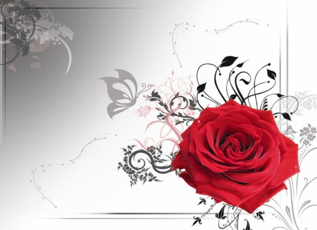 Happy-Rose-Day-7th-Feb-2012